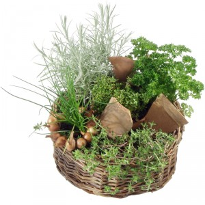 Herb Basket (Planted)